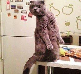 Иван Замечательная