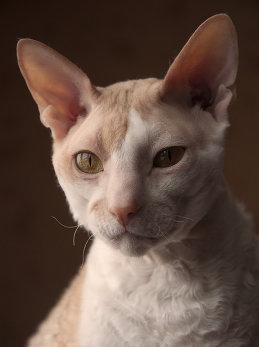 LadyCAT LadyCAT