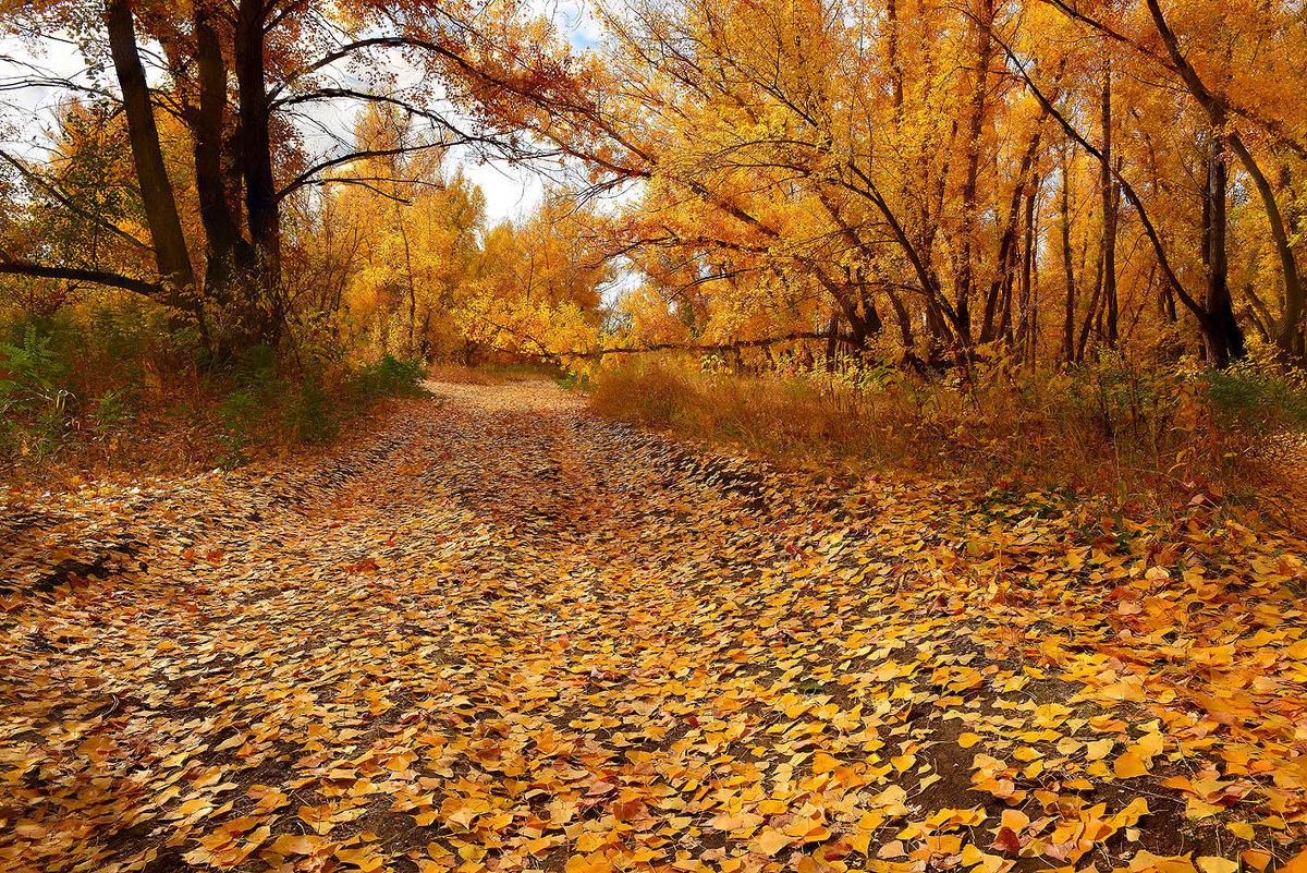 Осенние дороги - Михаил