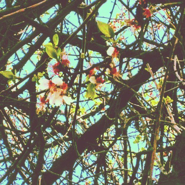 картина вот так цветет весна! - Ольга Сафонова
