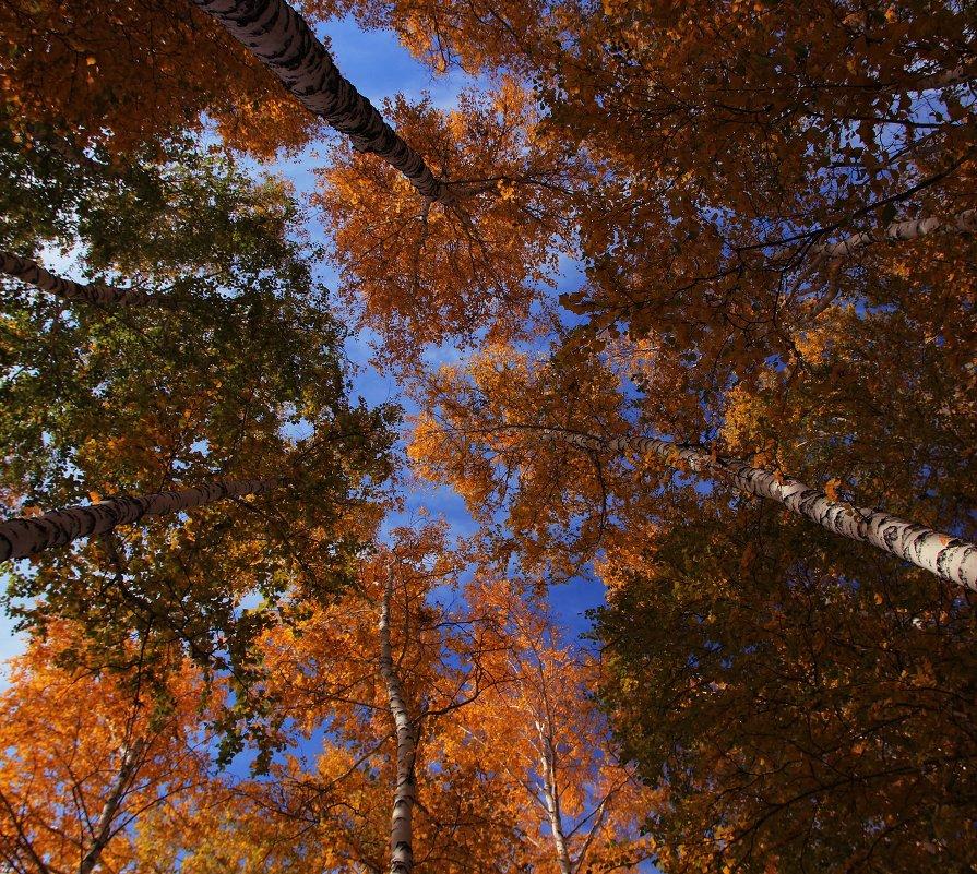 Осень - это последняя, самая яркая улыбка года!!! - Вадим Якушев
