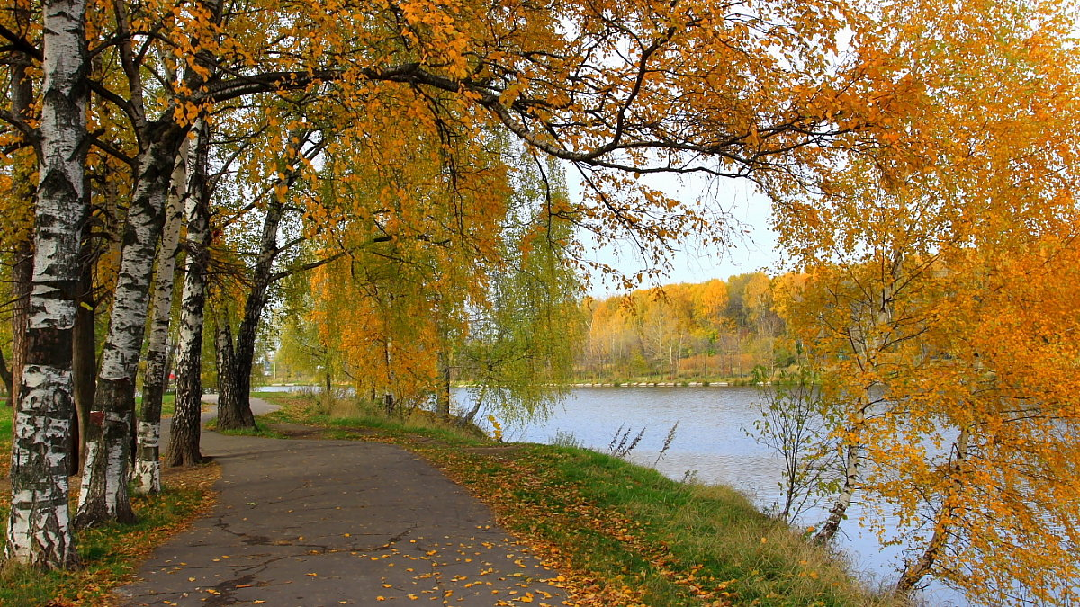 Осенью у Джамгаровского пруда. - Николай Кондаков