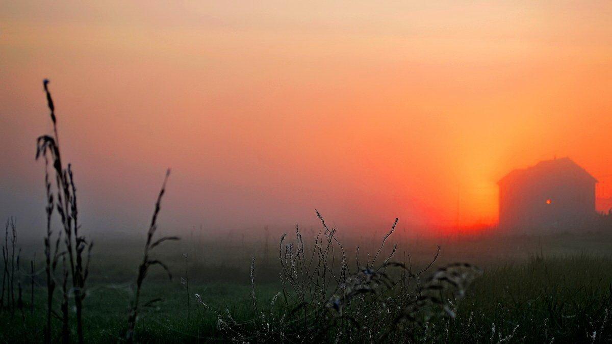 Цвет нового дня - Ростислав