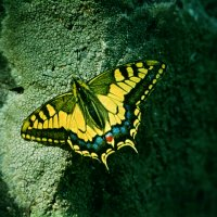 Бабочка. :: Виктор Осипчук
