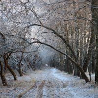 Зимний путь :: Делана Романова