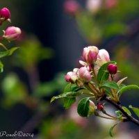 Краски природы в преддверии лета :: Андрей Розов