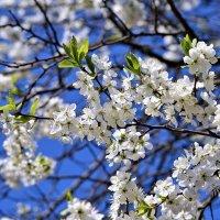 Запахи весны :: Андрей Кузьминов