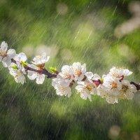 Весенний дождь :: Игорь Сарапулов