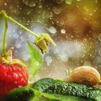 после дождика :: Наталья