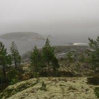 Туманная Ладога :: Galina