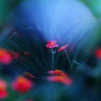 Аленький цветочек :: Игорь Терехин