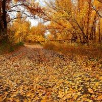 Осенние дороги :: Михаил
