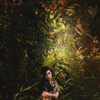 В сказочном лесу. :: Валерий Саломатин