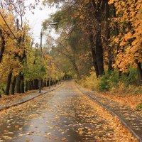 Осеннее настроение :: Владимир59