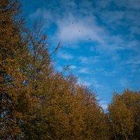 Осень... :: Юлия Сургучёва