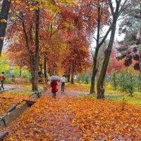 Осень зябкая мокнет...Тихо льётся с веток листьев медь... :: Александр Васильевич Ребенок