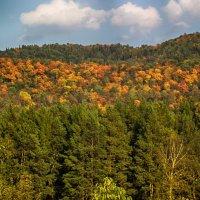Красочная осень :: Александр Зенченко