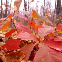 Осенний букет... :: Андрей