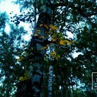 Осенний лес :: Максим