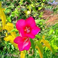 осенний цветок :: shota
