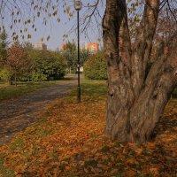 """""""...спешу.спешу в знакомый парк,там осень желтая гуляет..."""" :: Galina Krayneva"""