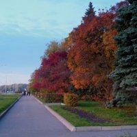 Краски осени :: Татьяна