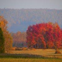 А лес,что терем расписной. :: nadyasilyuk Вознюк