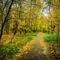 Осень - рыжая подружка :: Игорь Герман