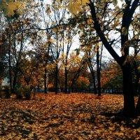 Восень :: Diana