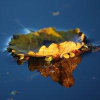 Осенний странник :: Ирина Подольская