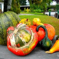 Осень дарит нам подарки :: Наталья Александрова