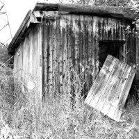 Домик в лесу :: Екатерина