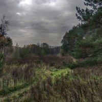 Осенние тропы :: Константин Сафронов