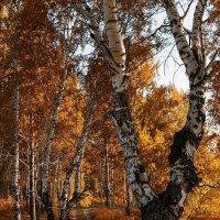 Осень бархатная. :: Александр