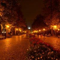 Ночь в парке :: Андрей + Ирина Степановы