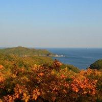 Золотая осень в Приморье :: Ольга Кузьмина
