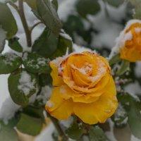 первый снег :: галник