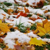 Осень Под Снегом :: Данила