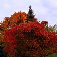багряная осень :: евген03 Левкович