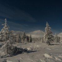 Лунная ночь :: Михаил Потапов