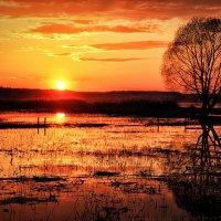 Плещеево озеро :: Марина Назарова
