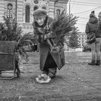Купите ёлочку... :: Владимир Голиков