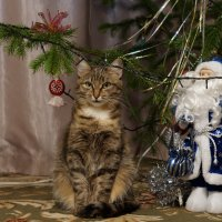 Охрана Деда Мороза всегда на чеку! :: Andrey S.