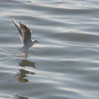 танец над морем :: Baqir