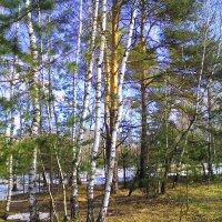 запах апреля... :: александр дмитриев
