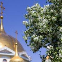 Моя весна. :: Наталья Новикова (Камчатская)