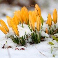 А зима не сдается... :: Anna P
