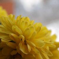 Весенний колорит :: Дарья