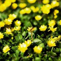 Первые цветы :: Viktoria Shakula
