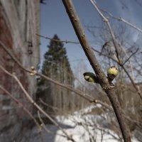 Весна в старой усадьбе :: Евгений Жиляев